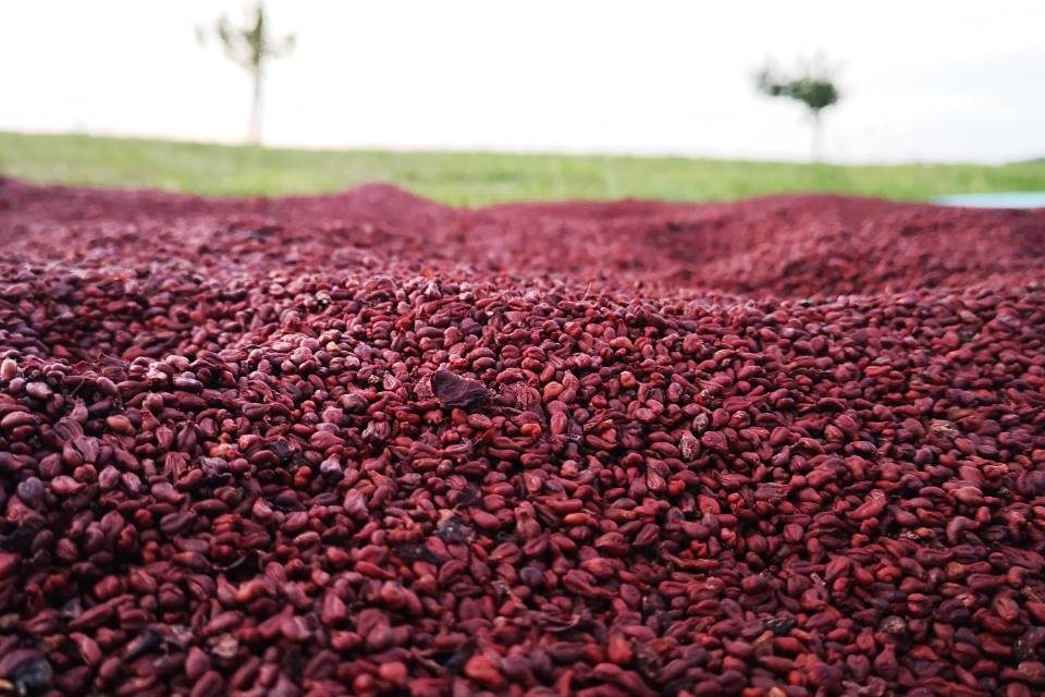 BOLFAN ulje sjemenki grožda